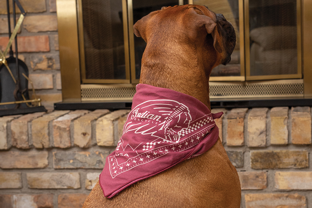 Treat Your Pets With Indian Motorcycle Gifts This Christmas